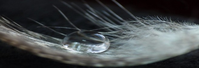 cropped-a-drop-on-a-feather_00442482.jpg